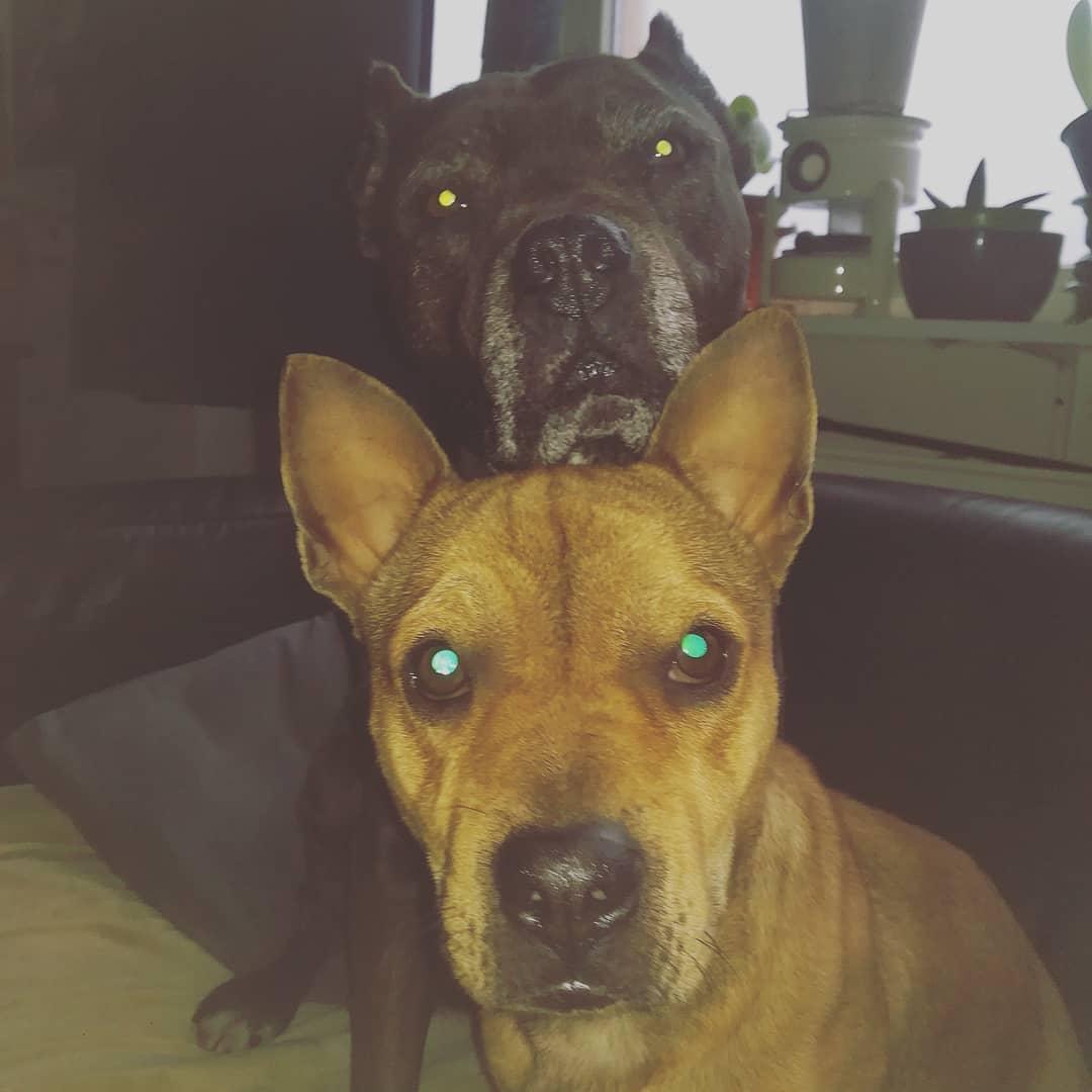 buitenlandse zwerfhonden adopteren